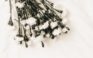 funeral homesinLaureldale, PA